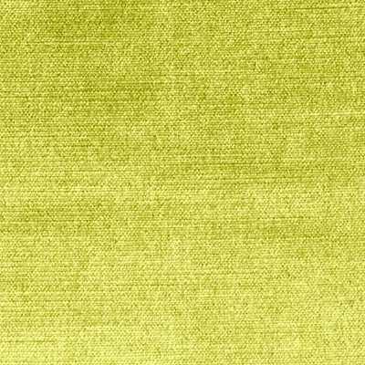 Ginger - MAMBO GREEN